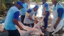 Berdayakan Peternak Lokal, Dompet Dhuafa Target 30 Ribu Hewan Kurban
