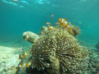 Taman Nemo Pulau Pahawang.