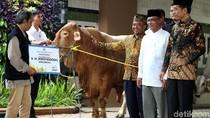 Jokowi Serahkan Dua Sapi Limosin ke PP Muhammadiyah