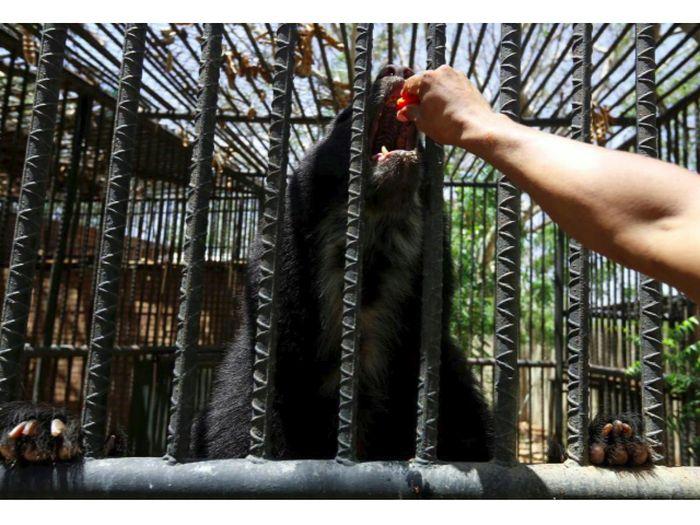 75 Gambar Binatang Yg Sedih Terbaru