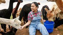 Pulang Kampung untuk Beternak, Millennial Ini Hasilkan Rp 2 Miliar Per Tahun