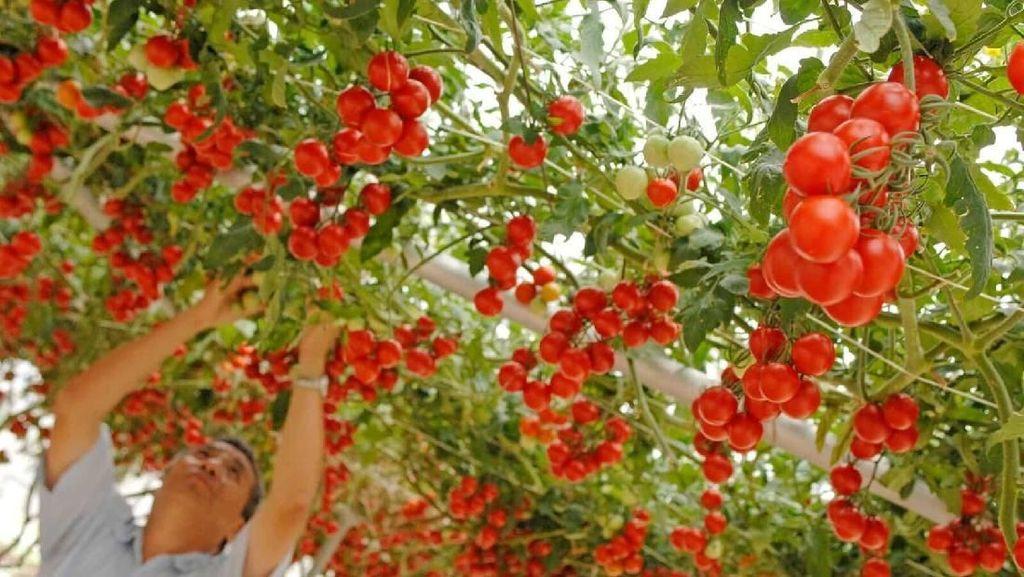 Wah! Disney World Bikin Kebun Sayur dan Buah Ukuran Jumbo
