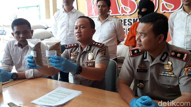 Kapolres Serang AKBP Indra Gunawan menunjukkan ketumbar berbahan kimia