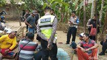 Polisi Gerebek Sabung Ayam di Pandeglang, 7 Orang Ditangkap