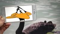 Lucunya Daffy Duck.Dok. Instagram/francoisdourlen