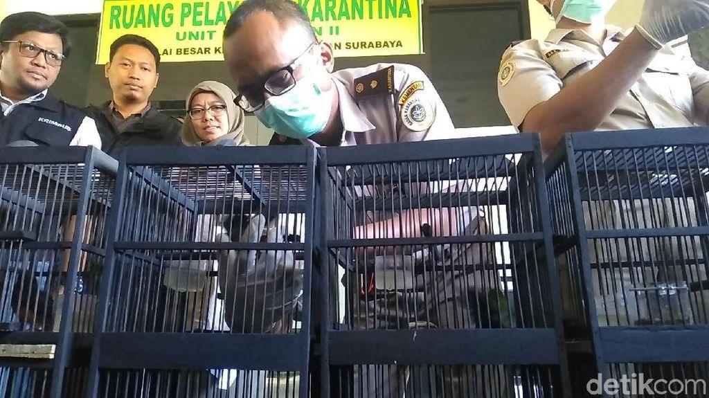 154 Ekor Burung dari Kalteng Gagal Diselundupkan ke Surabaya