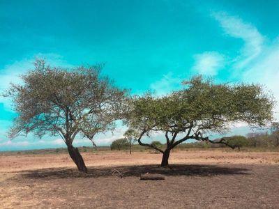 Banyuwangi dan Keindahan Alamnya