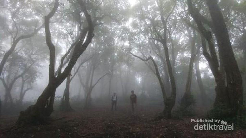 Nuansa Kabut Misterius di Gunung Manglayang, Bandung