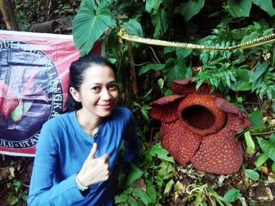 Arga Makmur, Rumah Rafflesia di Bengkulu Utara