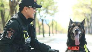 Mati Digigit Ular, Anjing Polisi Korsel Dapat Penghormatan Khusus