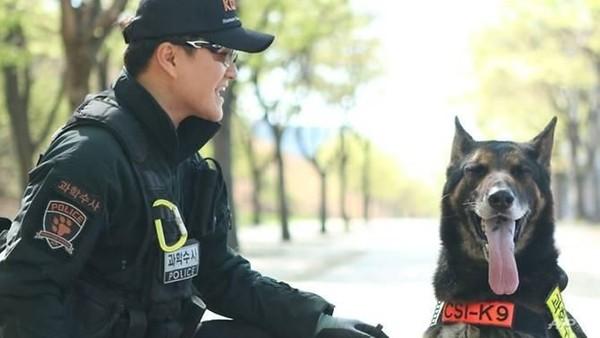 Anjing salah satu mamalia cerdas yang mampu belajar dengan cepat di lingkungannya. Jadi, jangan heran anjing digunaakan dalam misi khusus di militer atau kepolisian. (AFP/Handout)