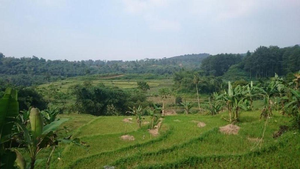 Asyiknya Main Basah-basahan di Curug Bogor