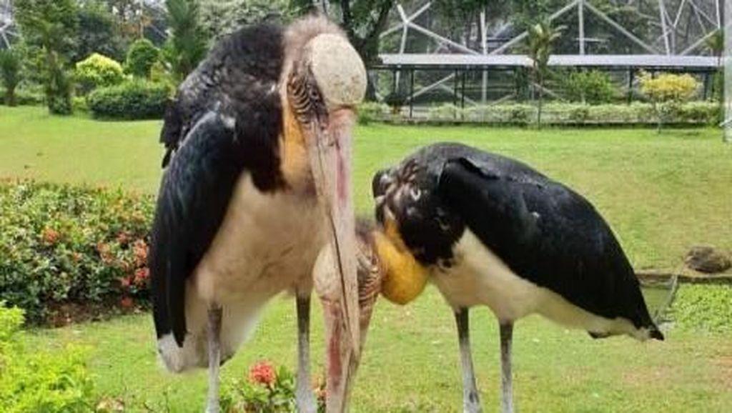 Wisata Edukasi di Taman Burung TMII