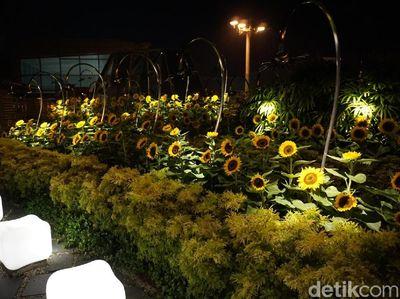Foto: Bandara yang Punya Taman Bunga Mat   ahari