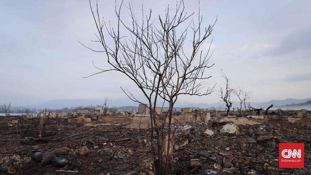 Pohon di area Waduk Jatigede yang mengering.