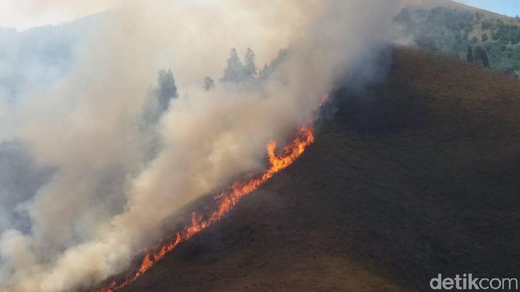 Kebakaran di Padang Savana & Bukit Teletubbies Bromo Terus Meluas