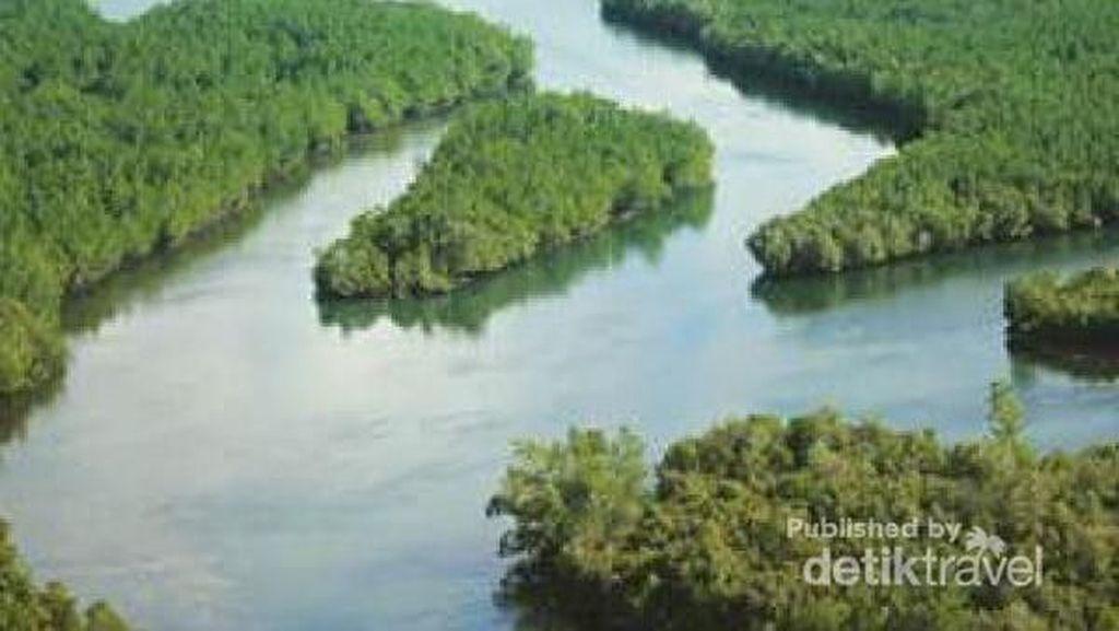 Tsunami, Mangrove, dan Burung Migran