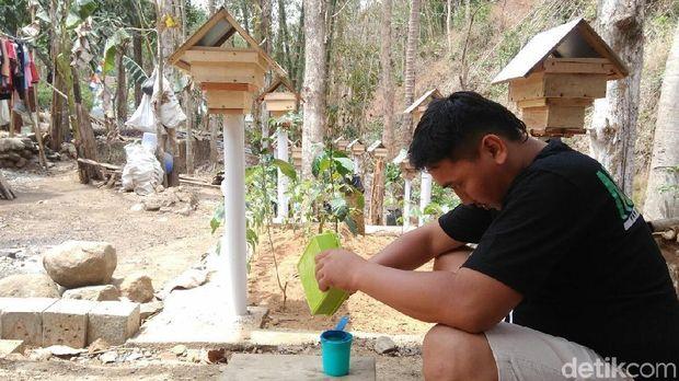 Melihat Budidaya Tawon Klanceng di Purworejo