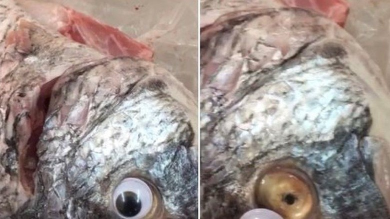 Tipu-tipu Pedagang di Kuwait: Ikan Ditempeli Mata Mainan Agar Segar