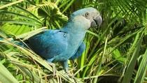 8 Spesies Burung Diprediksi Punah Abad Ini