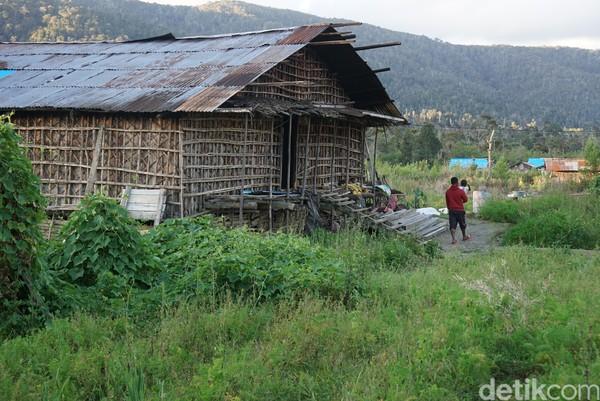 Suasana di Kabupaten Pegaf. Kalau menabrak babi di sana, kamu harus membayar babi sesuai jumlah puting susu. Paling mahal betina bisa sampai Rp 10 juta (Masaul/detikTravel)