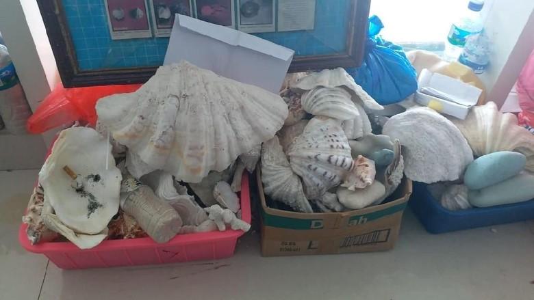 Foto: Kerang yang disita di Bandara Komodo (dok Istimewa/ Gapura Angkasa)