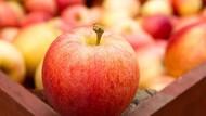 Apel Red Delicious Kini Tak Populer Lagi di Amerika, Ini Sebabnya