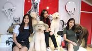 Gemasnya Anjing-Anjing Di Rumah Guguk Lembang Bandung