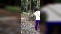 Tutup Hidung Sampai Lap Tangan, Tingkah Kocak Monyet Saat Diberi Durian