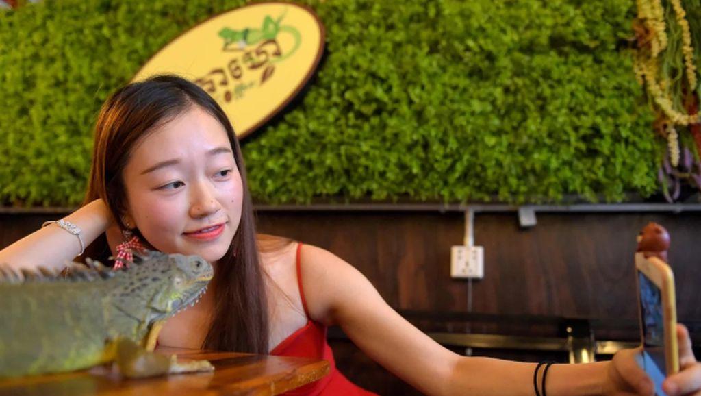 Serunya! di Kafe Ini Bisa Ngopi Sambil Selfie Dengan Ular
