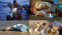 Alasan Menyedihkan Untuk Stop Pakai Kantong Plastik Belanja