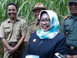 Ini Dalih Bupati Gunungkidul Kader NasDem Ogah Jadi Timses Jokowi