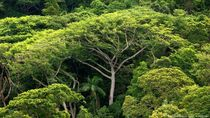 Filantrop Dunia Sumbang Rp 6 T Buat Lindungi Hutan Termasuk di RI