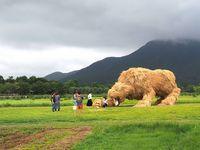 Tradisi Panen di Jepang, Petani Buat Karya Seni Dari Tumpukan Jerami Padi