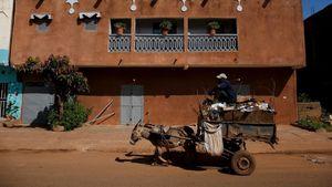 Foto: Keledai Unik Pengangkut Sampah dari Afrika
