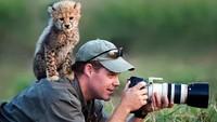 Foto: Lagi asyik berburu foto satwa, lha kok ada seekor anak cheetah yang nangkring di punggung si fotografer. Duh, jadi nggak konsen nih (Twitter/@polychromantium)