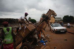Bukan Pakai Truk, Sampah di Negara Ini Diangkut Keledai