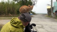 Foto: Seekor anak kucing dengan polosnya duduk di atas kepala Mitsuaki Iwago, seorang fotografer yang sedang membuat video dokumenter di Pulau Okinawa, Jepang. Mau marah tapi gemas. (Youtube/@lagrangialala)