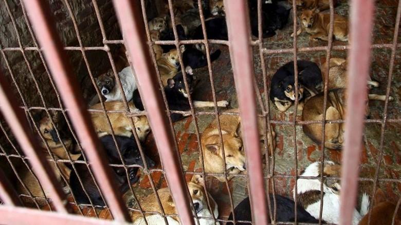 Bupati Karanganyar Akan Temui Pedagang Daging Anjing Hari Ini