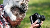 Foto: Kalau ini, ada anak harimau putih malah ngajak main si fotografer. Lihat sampai kepala si fotografer diuwel-uwel si anak harimau. (Twitter/@polychromantium)