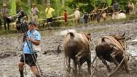 Foto: Fotografer ini terlalu asyik berburu foto acara Pacu Jawi di Indonesia, sampai hampir diseruduk sapi. Beruntung nggak kenapa-kenapa ya (Robertus Pudyanto/Getty Images)