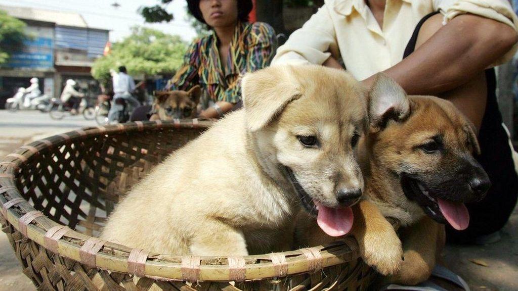 Warga Vietnam Diserukan Berhenti Makan Daging Anjing dan Kucing