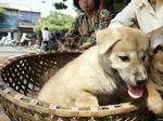 Surat Edaran Kementan: Daging Anjing Bukan Pangan