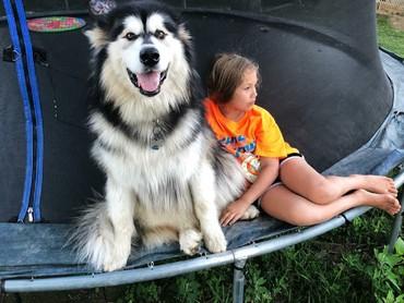 Anjing Alaskan Malamute jadi tempat bersandar si kecil setelah lelah bermain? Boleh juga. He-he-he. (Foto: Instagram/tikaani_astrid)