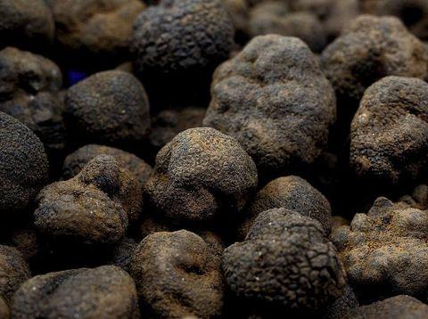 Jamur truffle yang berbentuk seperti gumpalan hitam. Jamur ini memiliki aroma yang kuat.