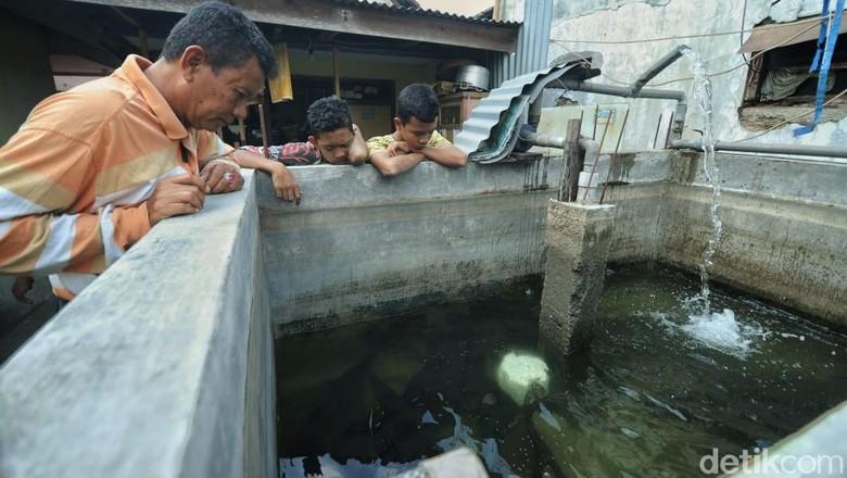 Takut Sanksi, Pria Ini Serahkan 17 Ikan Aligatornya ke Pemerintah