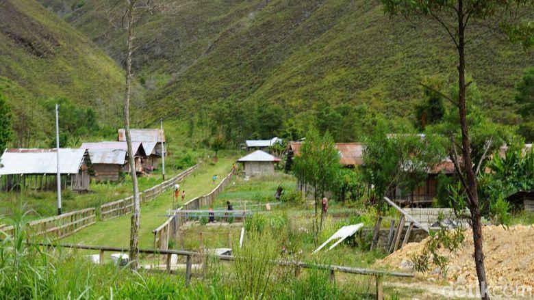 Kampung Kostera di Pegaf (Masaul/detikTravel)