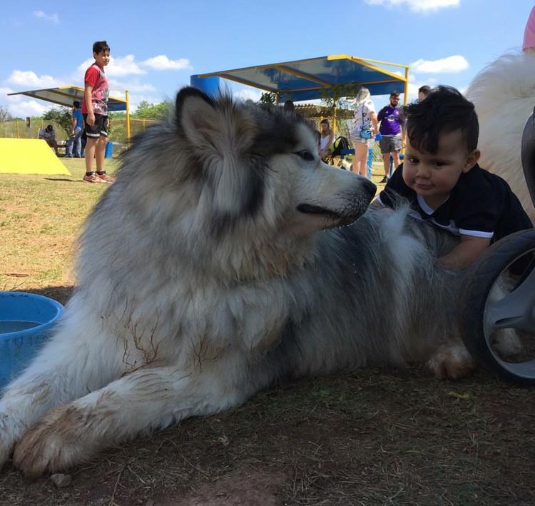 Saking besarnya si anjing, bocah ini sampai kesulitan mau pegang si guguk. Hi-hi-hi. (Foto: Instagram/amarokmalamute)