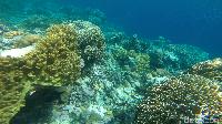 Aneka karang dengan ragam bentuk dan warna (Zaky Fauzi Azhar/detikTravel)