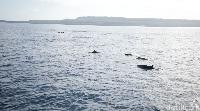 Lumba-lumba yang berenang bebas (Zaky Fauzi/detikTravel)